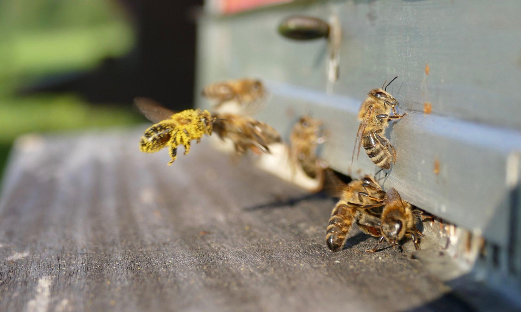 Société d'apiculture de la Gruyère